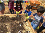 students planting together in the first grade garden beds