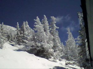 snow trees on the peaks